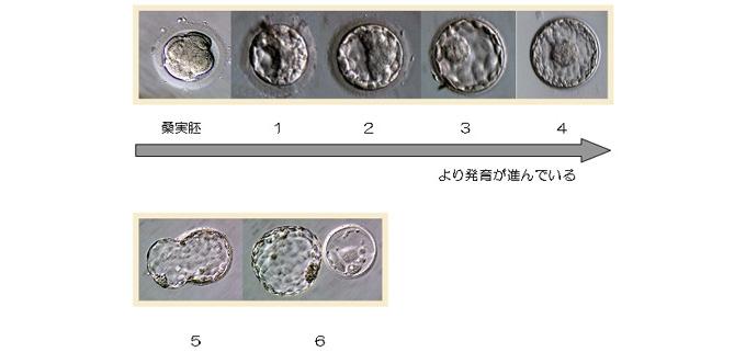 ml_taigai_grade02